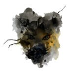 AP – Jaguar